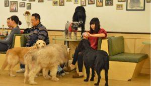 Dog Café de Seul
