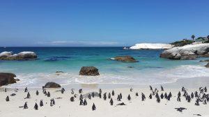 13 centimos, pingüinos. Libros Prohibidos