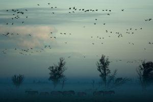 Todos los pájaros del cielo. Foto. Libros Prohibidos
