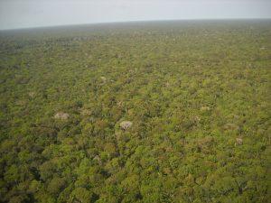 Selva amazónica, Incrustados. Libros Prohibidos