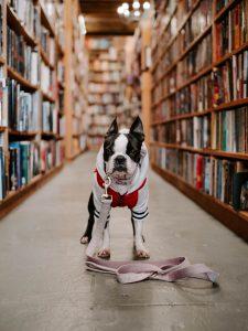 Todo sobre los VI PGB. Dog. Libros Prohibidos