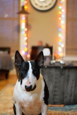 baxter. perro. Libros Prohibidos